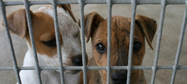 pair of dogs in a cage