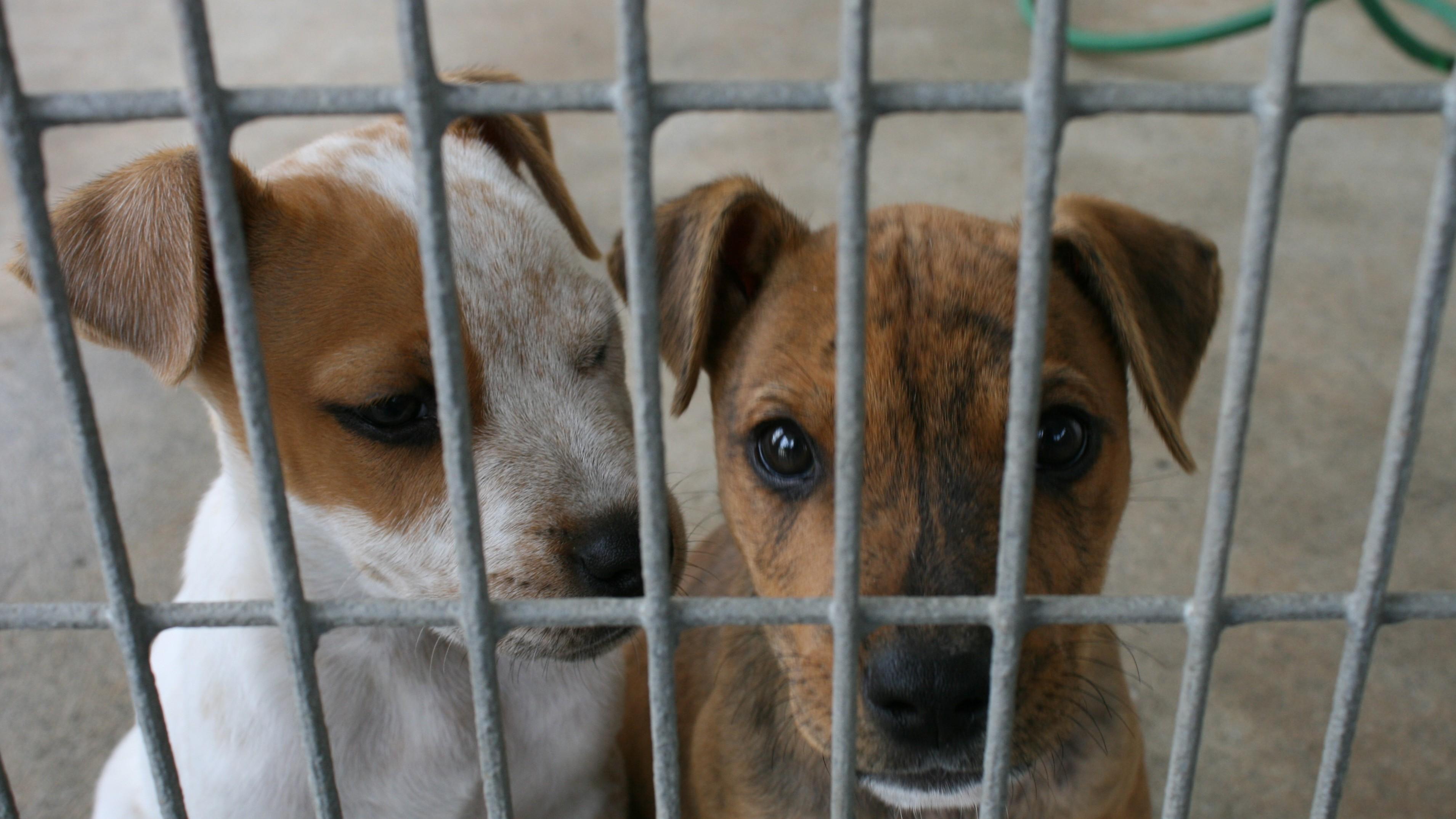 sofia announces 1 3m leva street dog shelter contract