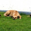 four stray dogs lying on grass