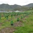 Srebrenica_Potocari_Memorial_2