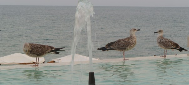 Seagulls at Riviera resort Golden Sands Bulgarian Black Sea coast photo Clive Leviev-Sawyer