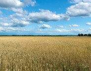 wheat fields photo Andreas Krappweis