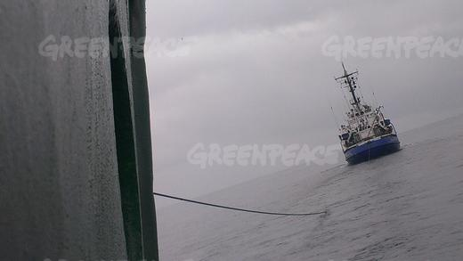 Arctic Sunrise Towed Towards MurmanskImage taken by a crew member onboard the Greenpeace ship, Arctic Sunrise shows the Russian Coast Guard vessel Ladoga towing it towards Murmansk. The Greenpeace ship was boarded by Russian special forces following a peaceful protests against Arctic oil drilling in the Pechora sea. Photo (c) Greenpeace
