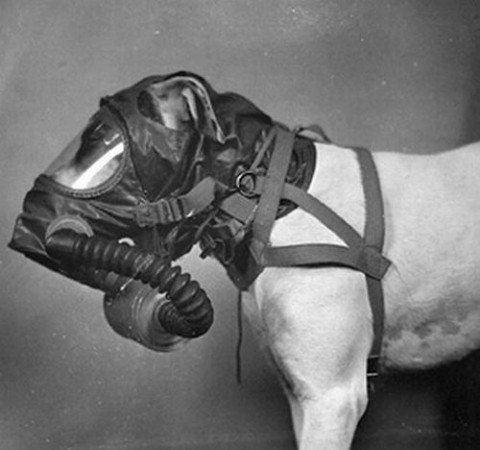 Gas masks were designed for army dogs