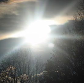 sun burst through trees photo Leah Sawyer