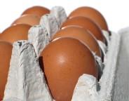 eggs photo sanja gjenero sxc hu