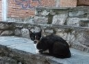 Cat Plovdiv photo Leah Sawyer