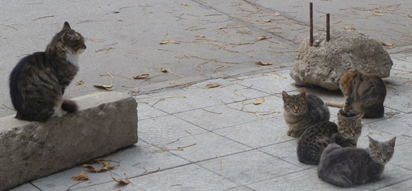 But Plovdiv also made the news for its campaign to significantly cut back its cat population. Plovdiv's authorities issued a reminder that people feeding street cats could face fines of hundreds of leva. An unexplained incident of mass poisoning of cats remained, by the end of the year, unexplained. Photo: Clive Leviev-Sawyer