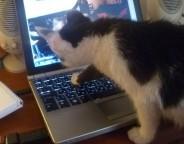 kitten felix laptop photo copyright Clive Leviev-Sawyer