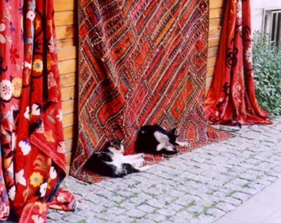 cats istanbul turkey photo copyright all rights reserved clive leviev-sawyer