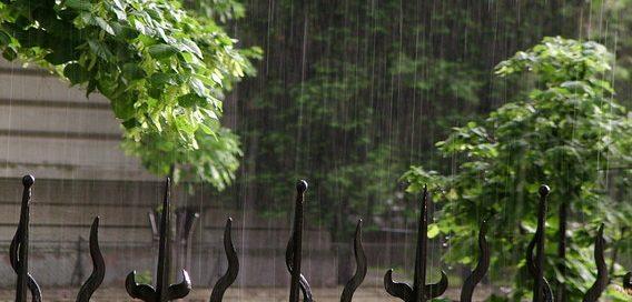 rain-goran-kolacko-freeimages-com