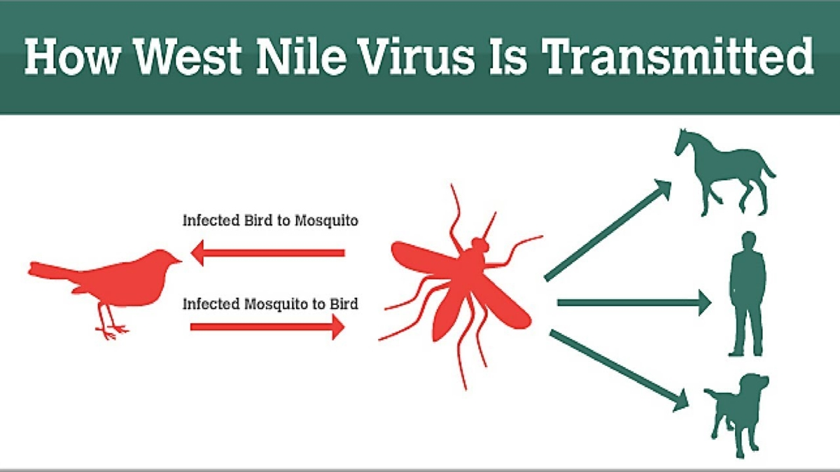 Bulgaria's Bourgas warns of danger of spread of West Nile